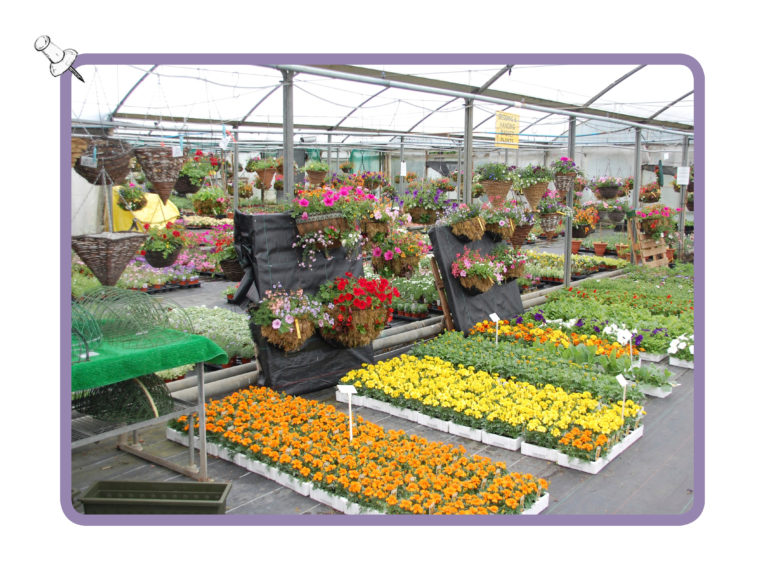 nursery-bedding-plants