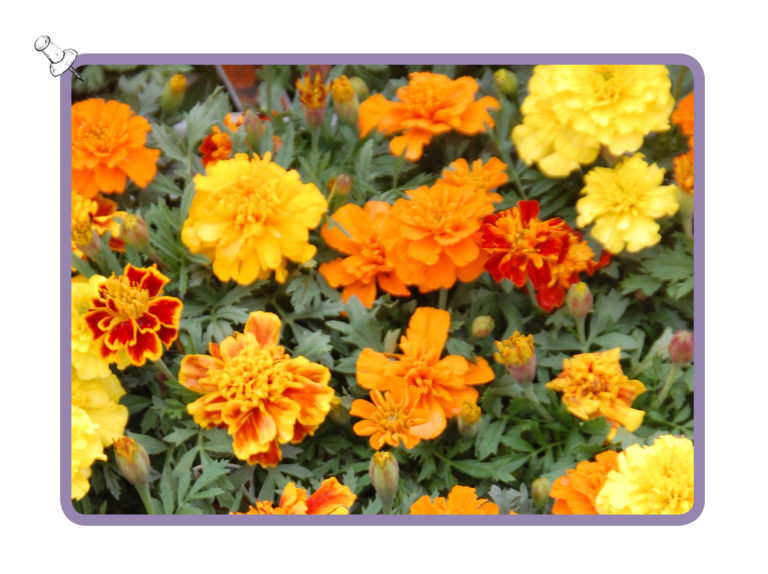 nursery-bright-orange