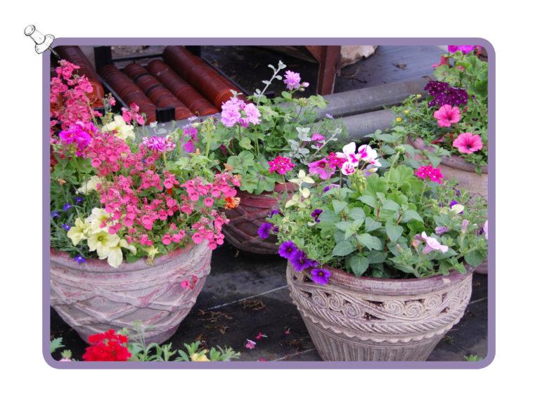 nursery-potted-plants